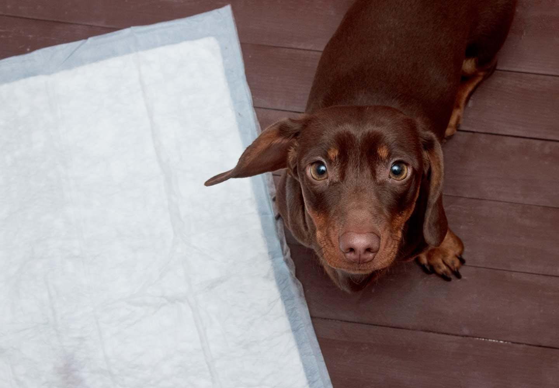 犬のうんち後の謎行動は「トイレハイ」かも!?その理由とは【獣医師監修】