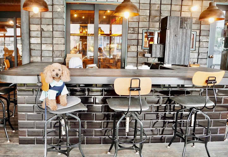 『ファーマーズキッチンザグラム』 外観 テラス 犬OK