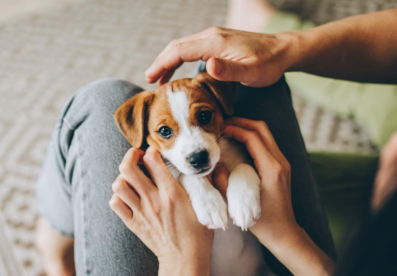 何気ない行動が愛犬のストレスに!?犬の寿命を縮めるNG習慣5選【獣医師監修】