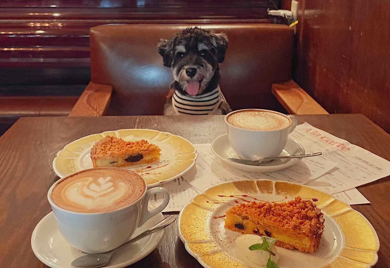 クリームチーズとプルーンのタルト ユイット 犬OK