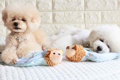 【古着を活用】愛犬用あごまくらを超簡単に手作り!ひんやり&飼い主の匂いつきで快適♪
