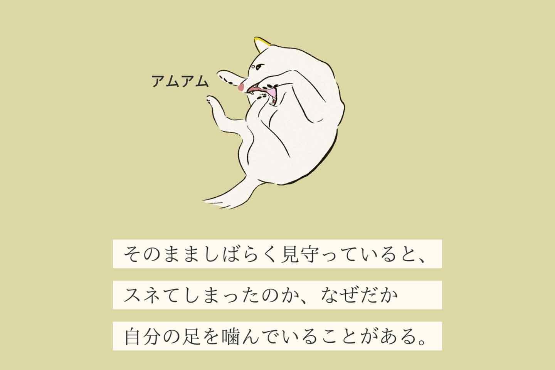 カマッテホシーヌの生態《変な犬図鑑006》