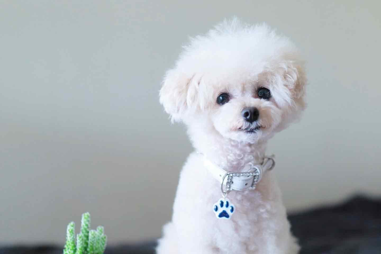 愛犬の迷子札チャームの作り方 レジンの型枠で可愛い形