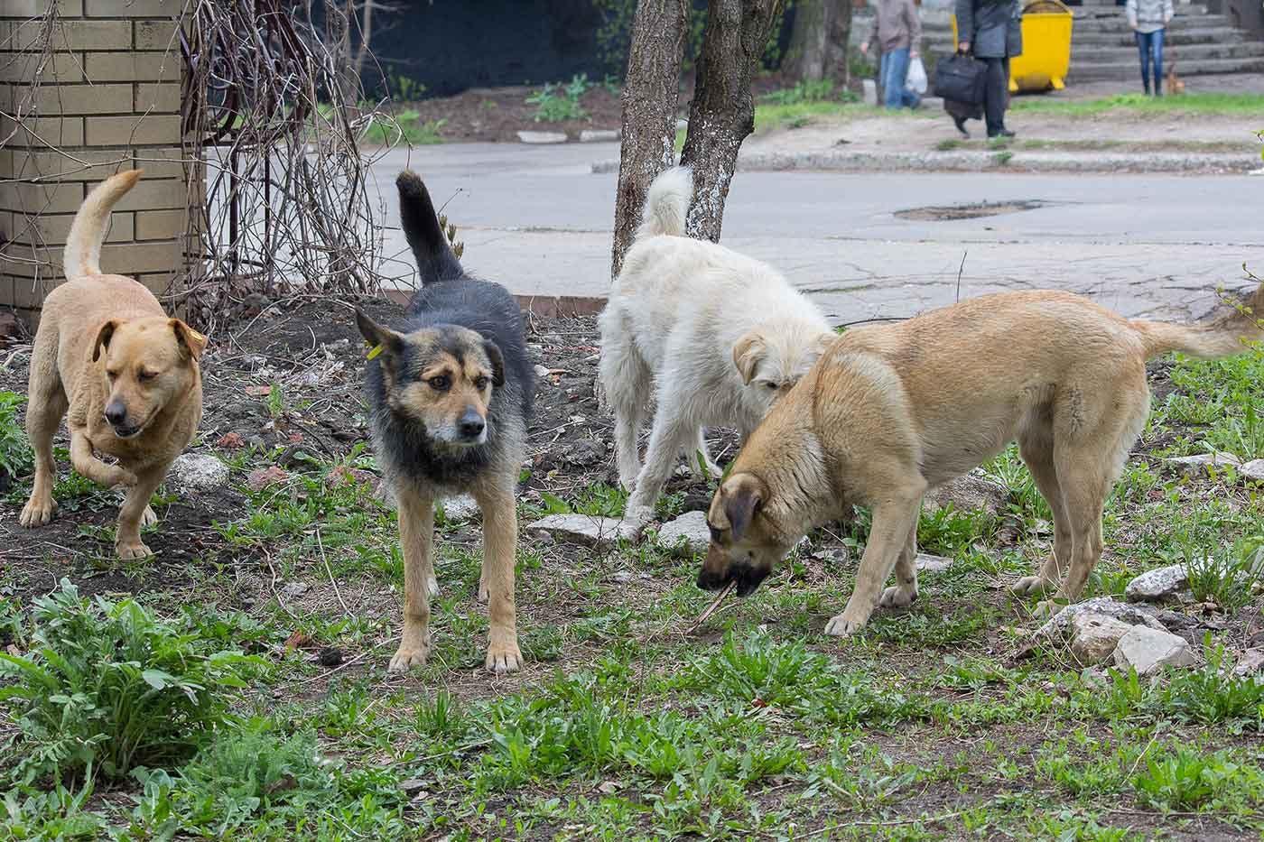 野犬化した犬たち