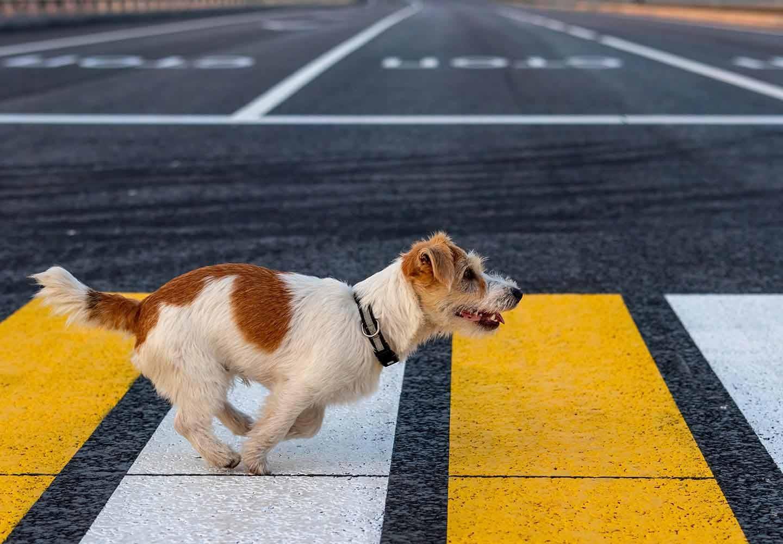 道路に飛び出す犬