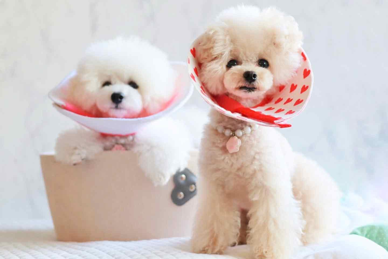 【型紙不要】愛犬用エリザベスカラーを手作り!飼い主の古着を切って貼るだけの安心&サステナブルなDIY♡