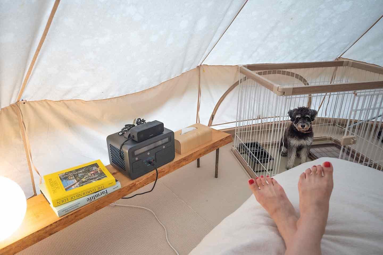 愛犬とテントで優雅な朝のひととき
