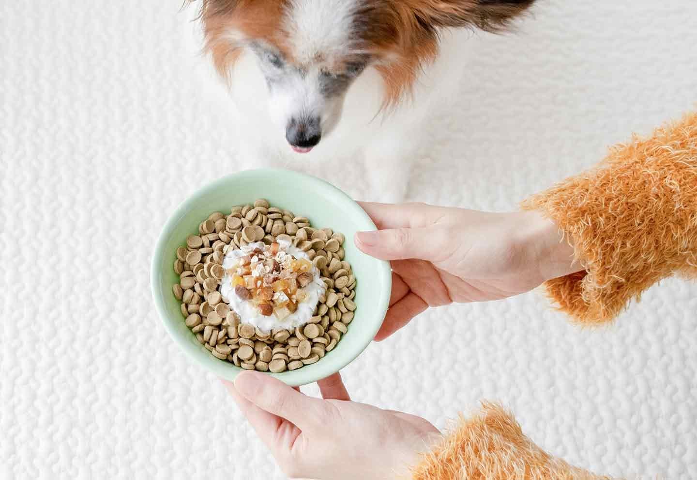 愛犬用干し芋と甘栗のオートミールヨーグルトグラノーラ