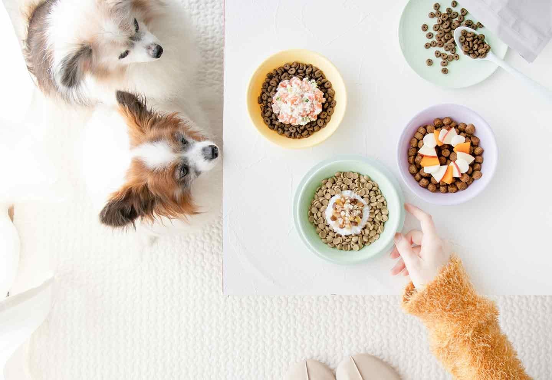 【お悩み別】秋の食材を使った愛犬用ドッグフードのトッピングレシピ3選!〜ダイエット・皮膚のケア・健康維持〜