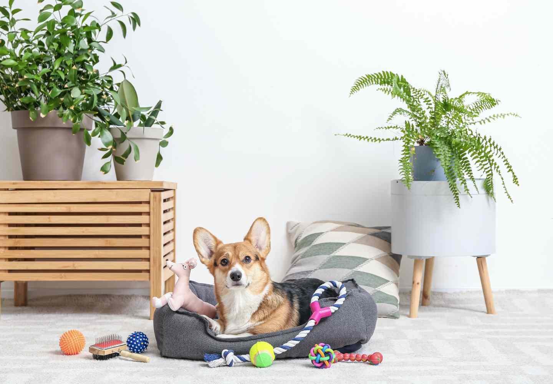 犬のおもちゃ、ちゃんと洗ってる?素材別の正しい洗い方と頻度を紹介【獣医師監修】