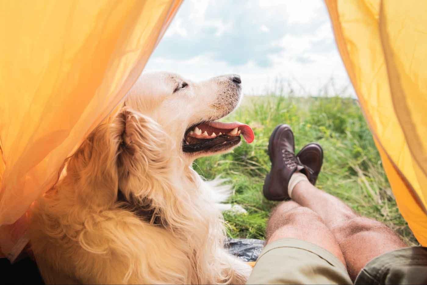 愛犬と行くキャンプで気を付けるべきこと