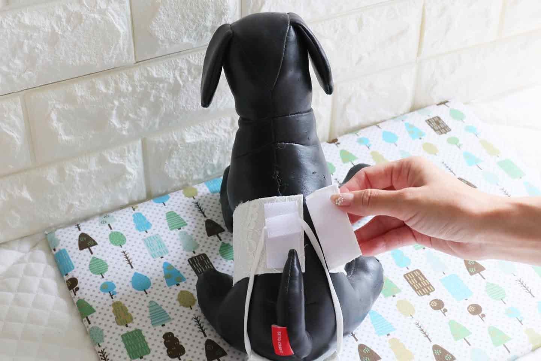 【付け方】簡単で脱げにくい!外出時でも安心の愛犬用マナーパンツ