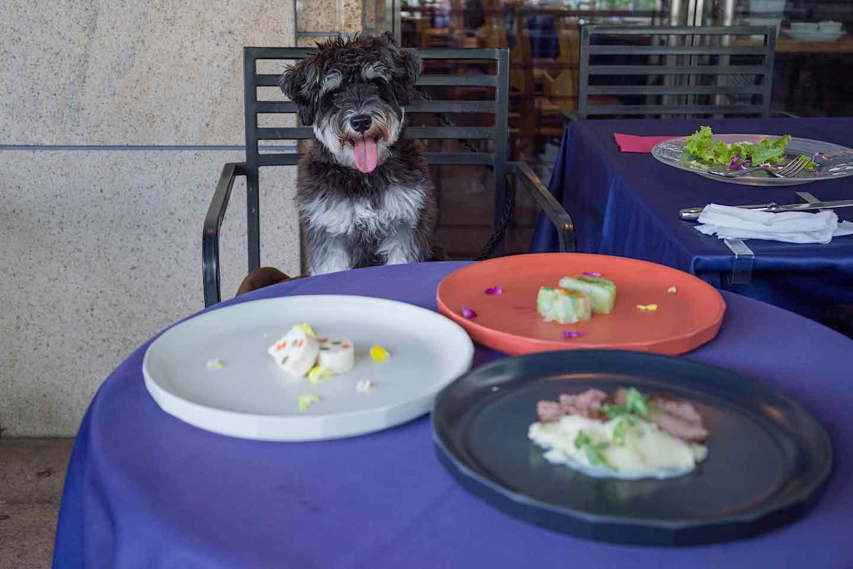 『BISTRO FAVORI』愛犬と特別な日の本格フレンチフルコース♡