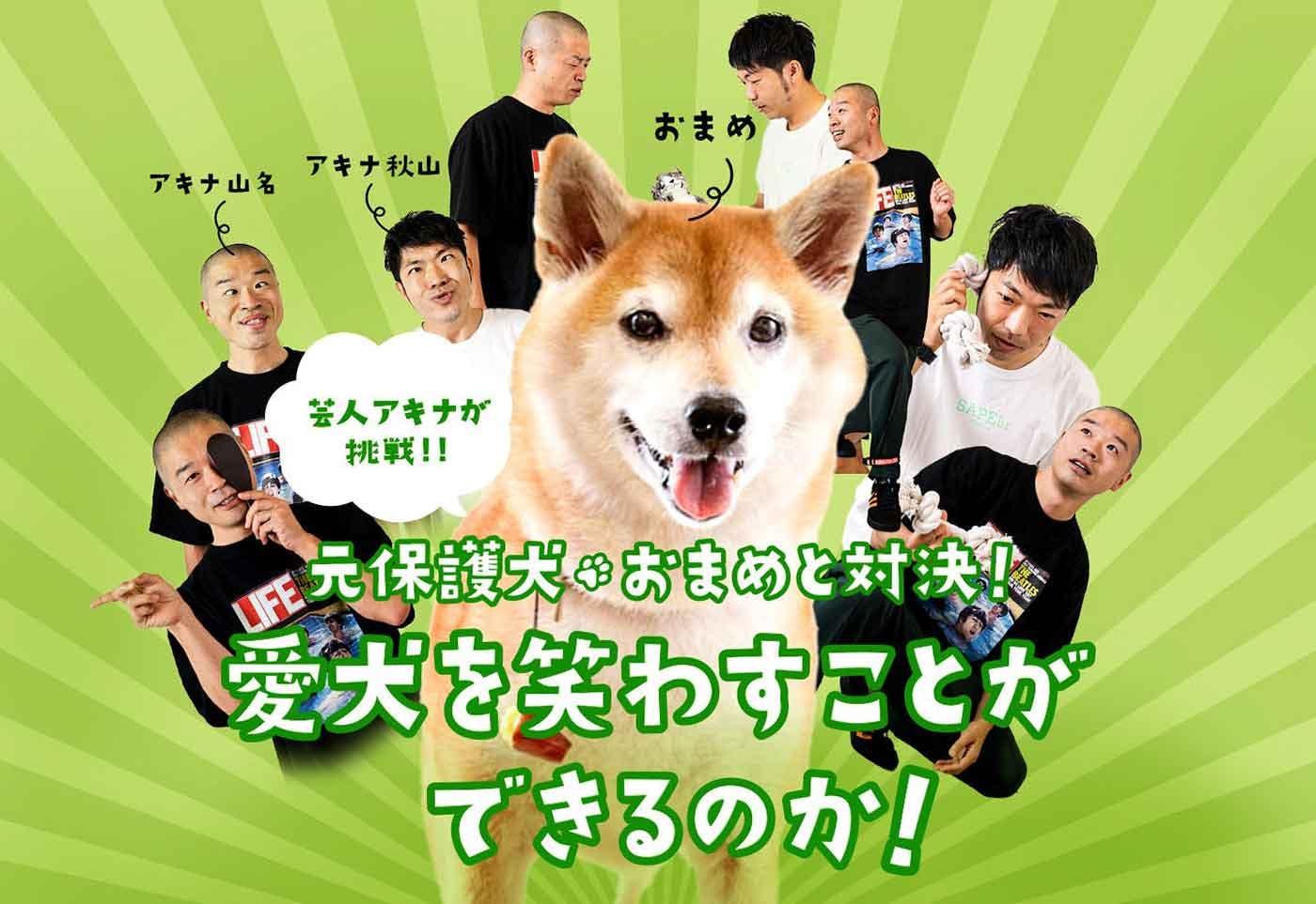 """芸人アキナが挑戦! 元保護犬""""おまめ""""と対決! 愛犬を笑わすことができるのか?"""