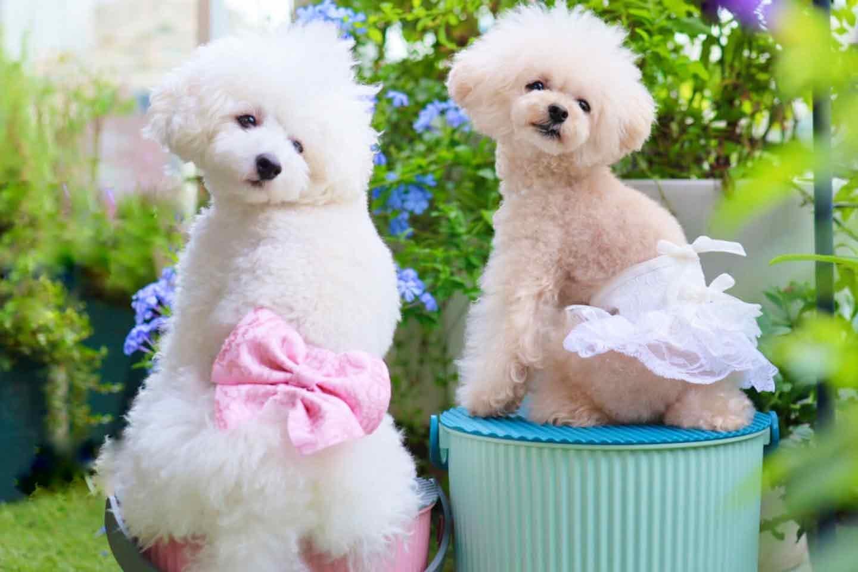 【型紙・ミシン不要】愛犬のマナーパンツを簡単に手作り!オス・メス使える作り方で外出時にも大活躍♪