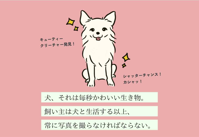 カメラヘタクソヌシの生態《変な飼いヌシ図鑑005》