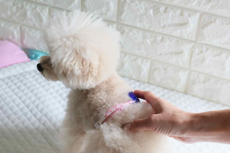 男女共用の愛犬用マナーパンツの作り方 愛犬の腰回りを測る