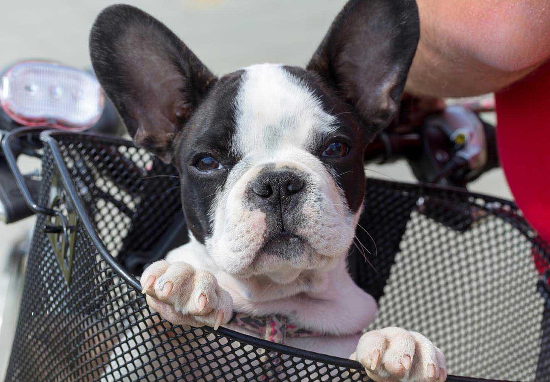 思わぬ事故に気をつけて!犬との暮らしのヒヤリハット事例10選【獣医師監修】