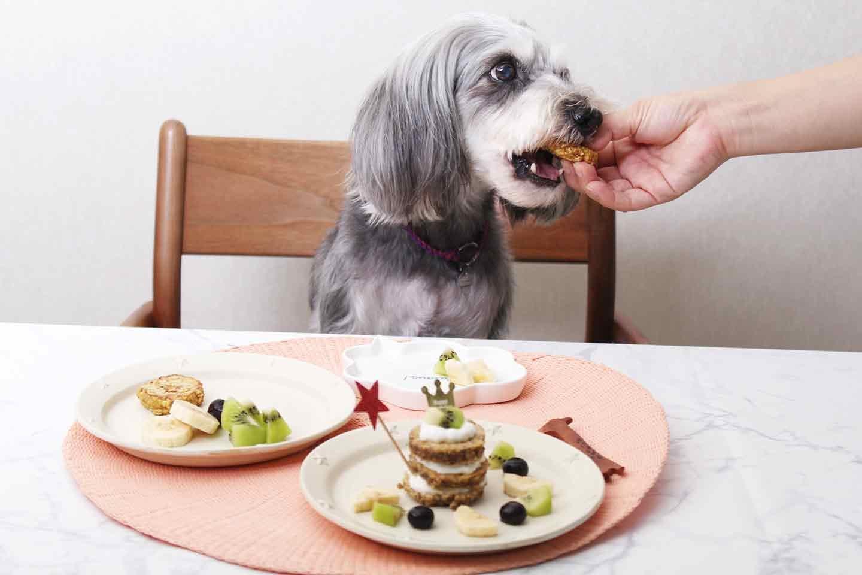 【与え方・保存方法】持ち歩きおやつにも便利な愛犬用ヘルシーパンケーキ