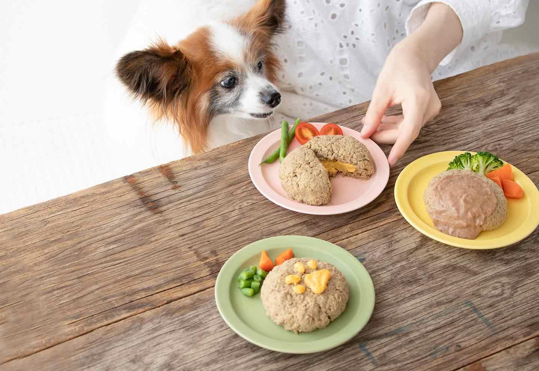 【高齢犬にもオススメ】超簡単な愛犬用ハンバーグ風ドッグフードアレンジ!食べやすい食感&風味で食欲UP♡