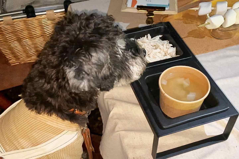 犬用メニュー 季節の野菜スープと千葉県産「錦爽どり」のささみ