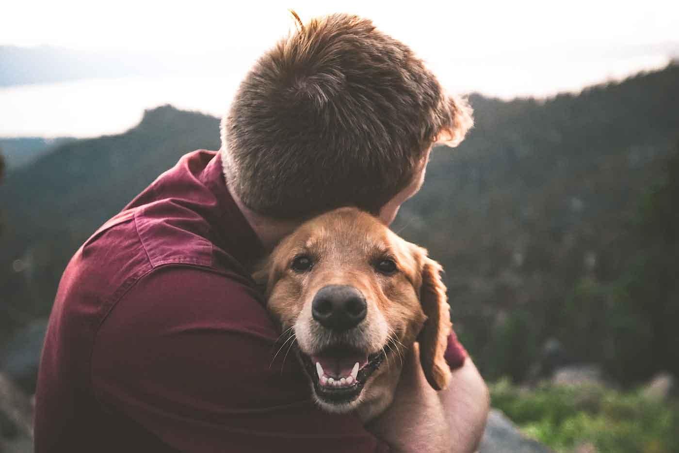 【動物虐待防止の日】2つのタイプとその定義は?見つけたら取るべき行動も解説