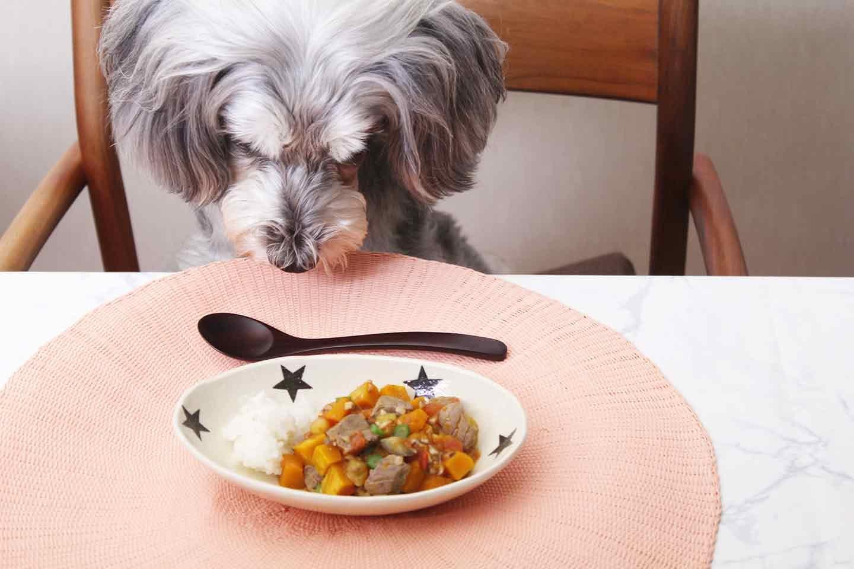 高齢犬にもオススメの愛犬用かぼちゃのラタトゥイユ!