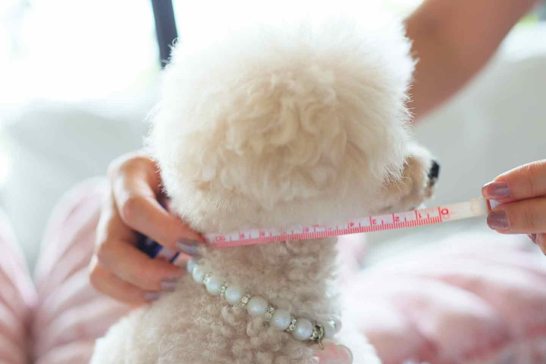 愛犬用エリザベスカラーの作り方 愛犬のサイズを測る