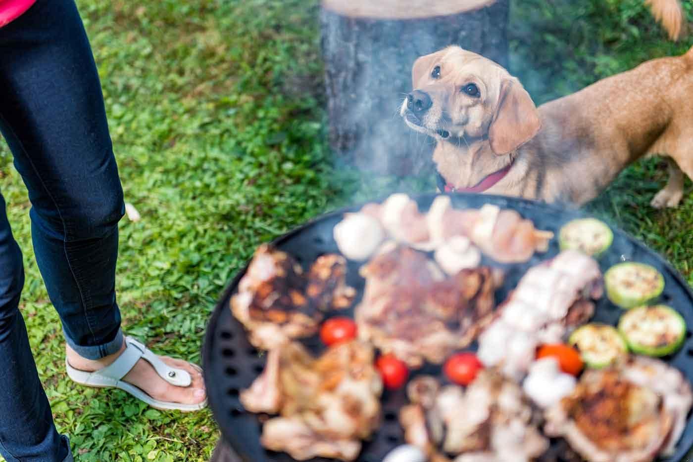 ラフォーレグランピングフィールド修善寺で愛犬とBBQ