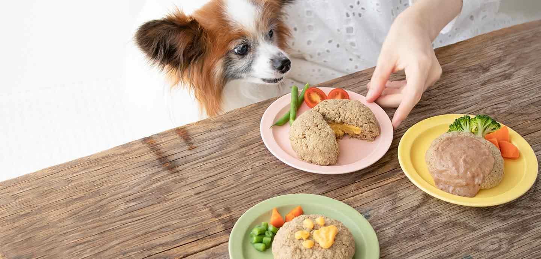 【加熱不要】超簡単な愛犬用ハンバーグ風ドッグフードアレンジ!パピーからシニアまで食べやすい食感&風味♡