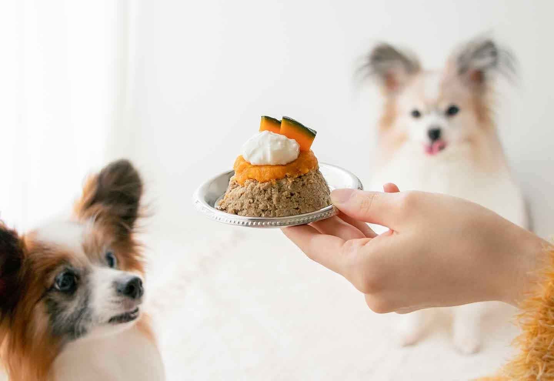 【使用食材について】犬の好きな「甘味」のヒミツ 野菜