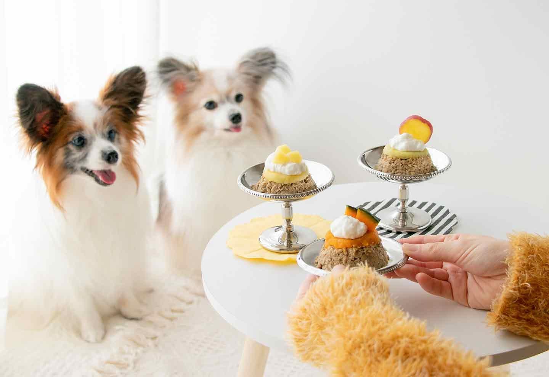【高齢犬も食べやすい】ドッグフードをプリン風にアレンジ!秋の甘みで食欲増進〜おいも&かぼちゃトッピング〜