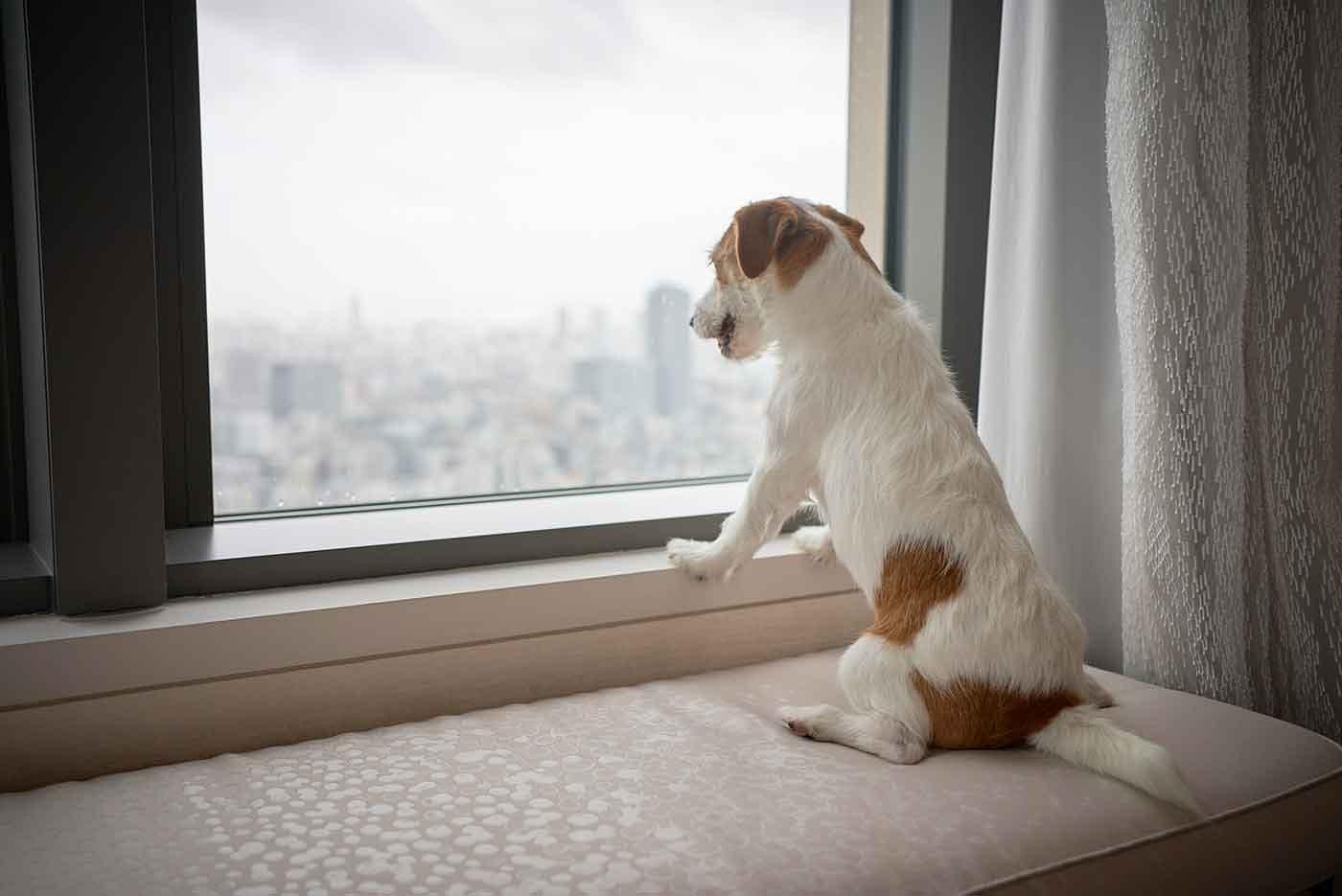 5つ星ホテルに愛犬と泊まる!『マンダリン オリエンタル 東京』が初となる愛犬向けサービスを開始