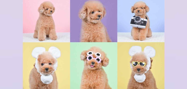【本格撮影】プロが撮る犬に特化した写真屋さん3選!愛犬とのかけがえのない瞬間をたくさん綺麗に残そう♪