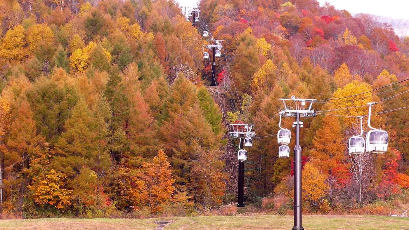 この週末が見頃!愛犬と空中散歩で紅葉を楽しめる『裏磐梯ロープウェイ』