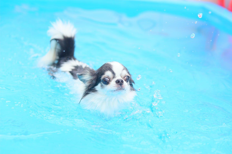 【特典あり】愛犬家のパラダイスへ!三浦半島でわんちゃんと一緒に海も山も満喫