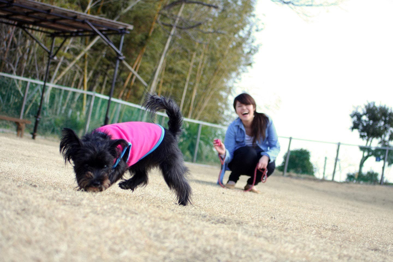 わんわんPark (ドッグラン)で愛犬と遊ぶ