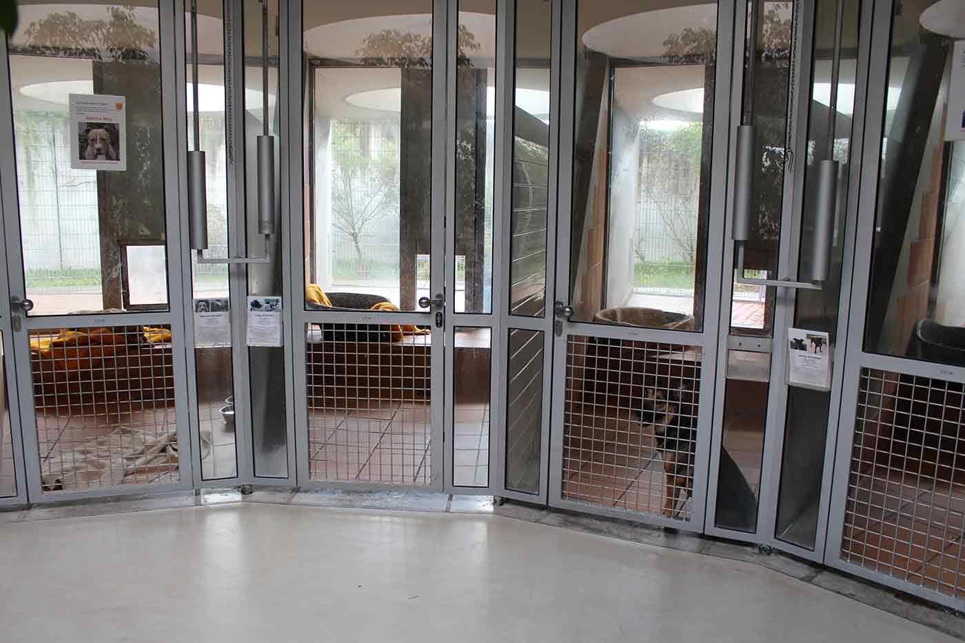 ティアハイム・ベルリンの犬舎の様子