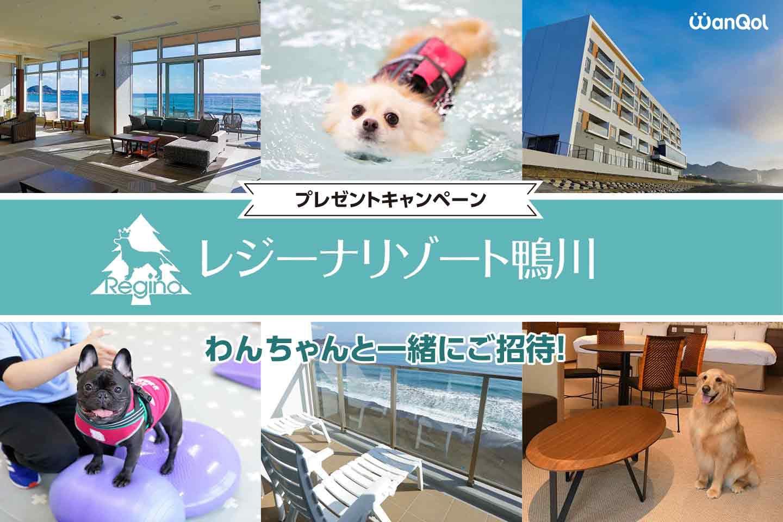 【宿泊ご招待】レジーナリゾート鴨川に愛犬と泊まれるキャンペーンを開催!