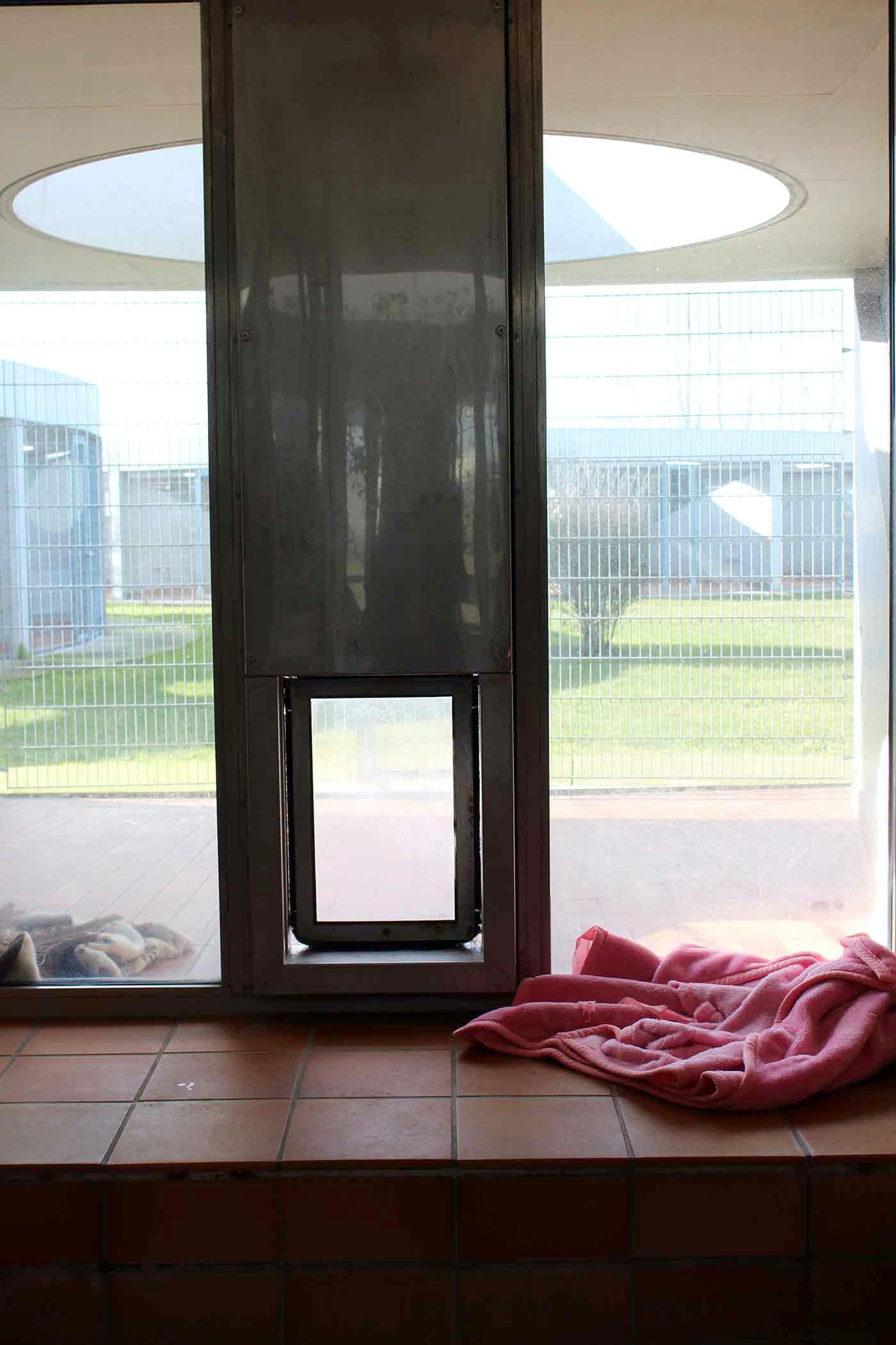 ティアハイム・ベルリンの犬舎に備わっている犬専用の出入り口