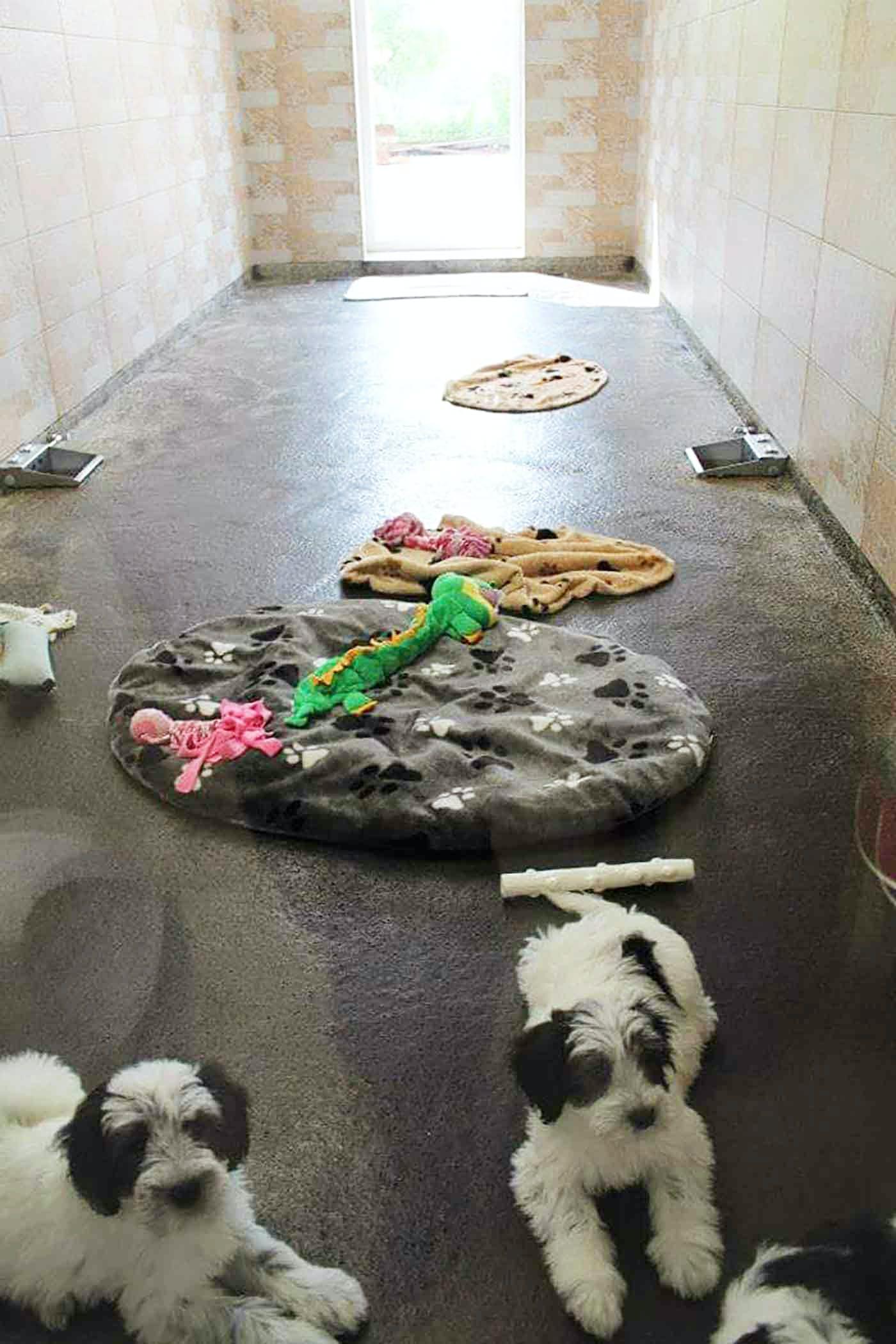 ドイツのペットショップの犬舎