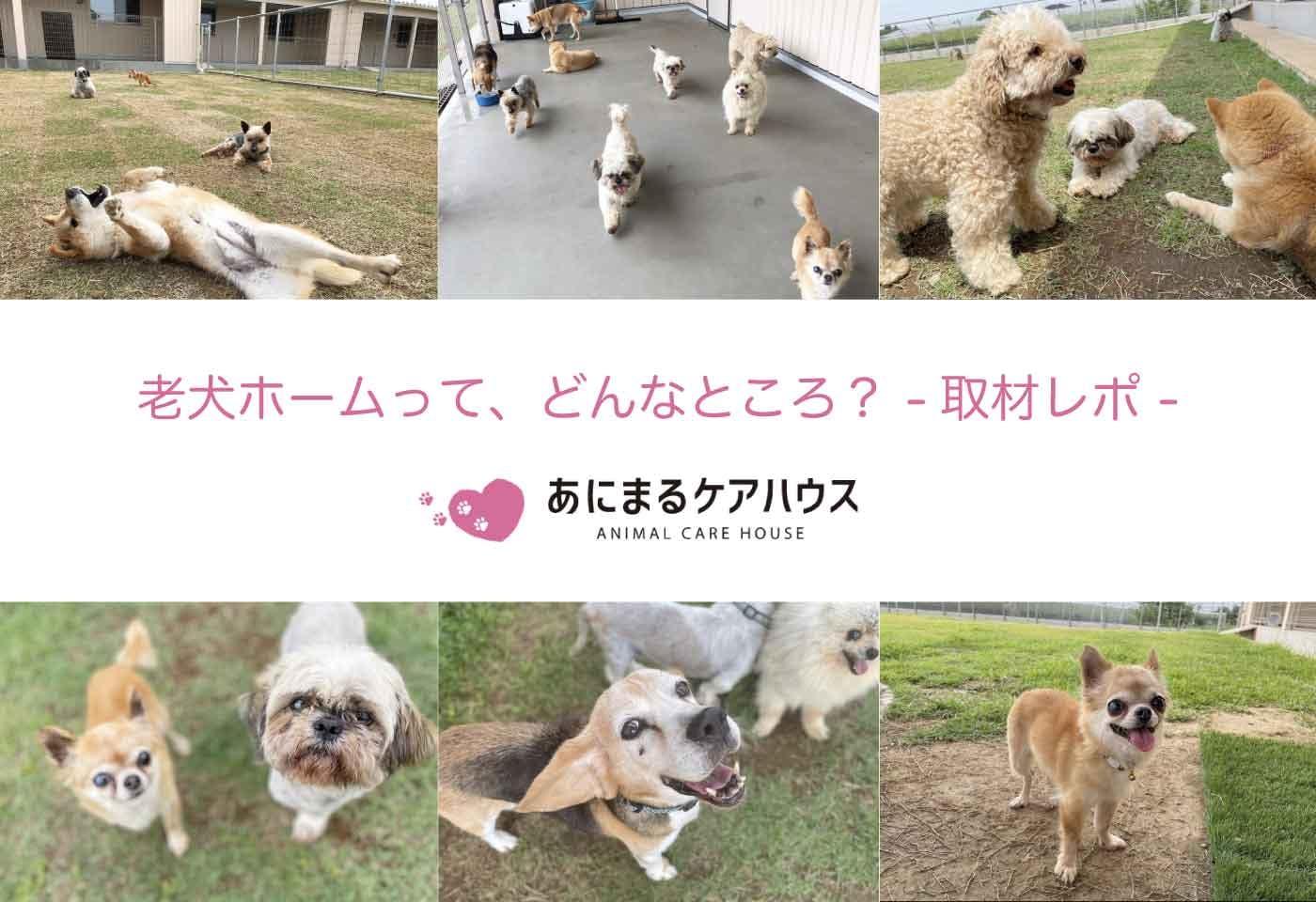 埼玉県のドッグランつき老犬ホーム「あにまるケアハウス」取材レポート