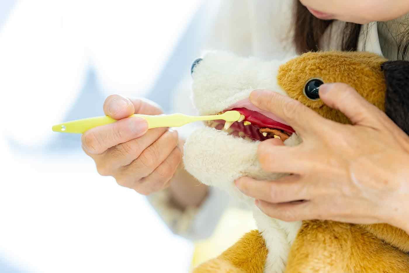 犬の歯に歯ブラシを当てる