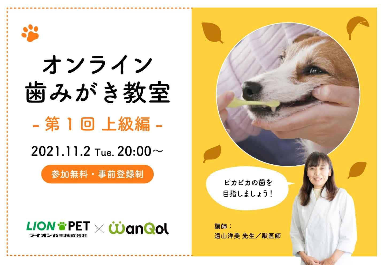 オンライン歯みがき教室《第1回・上級編》 開催決定!獣医師さんから直接やり方を教わろう!
