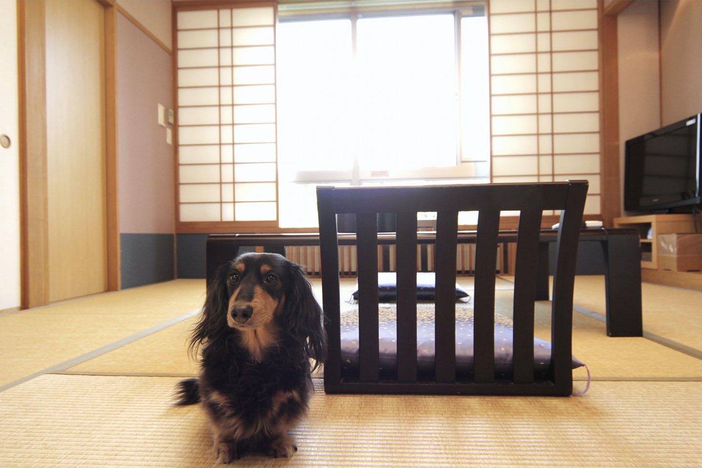 ペットと泊まる宿 Dog's Rest Place