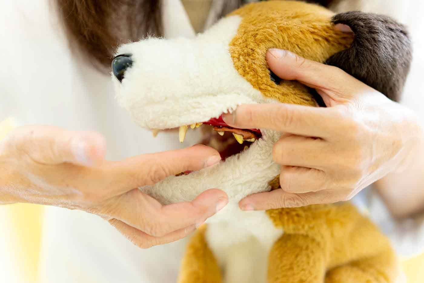 犬の唇を持ち上げて歯を磨く様子