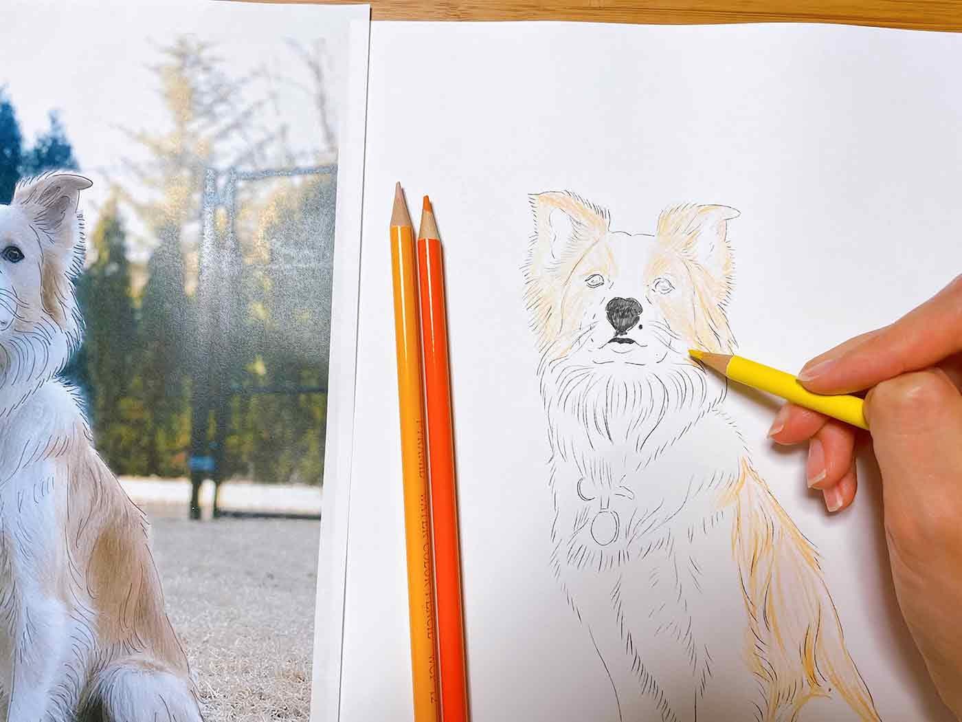 犬の絵に色を塗っているところ