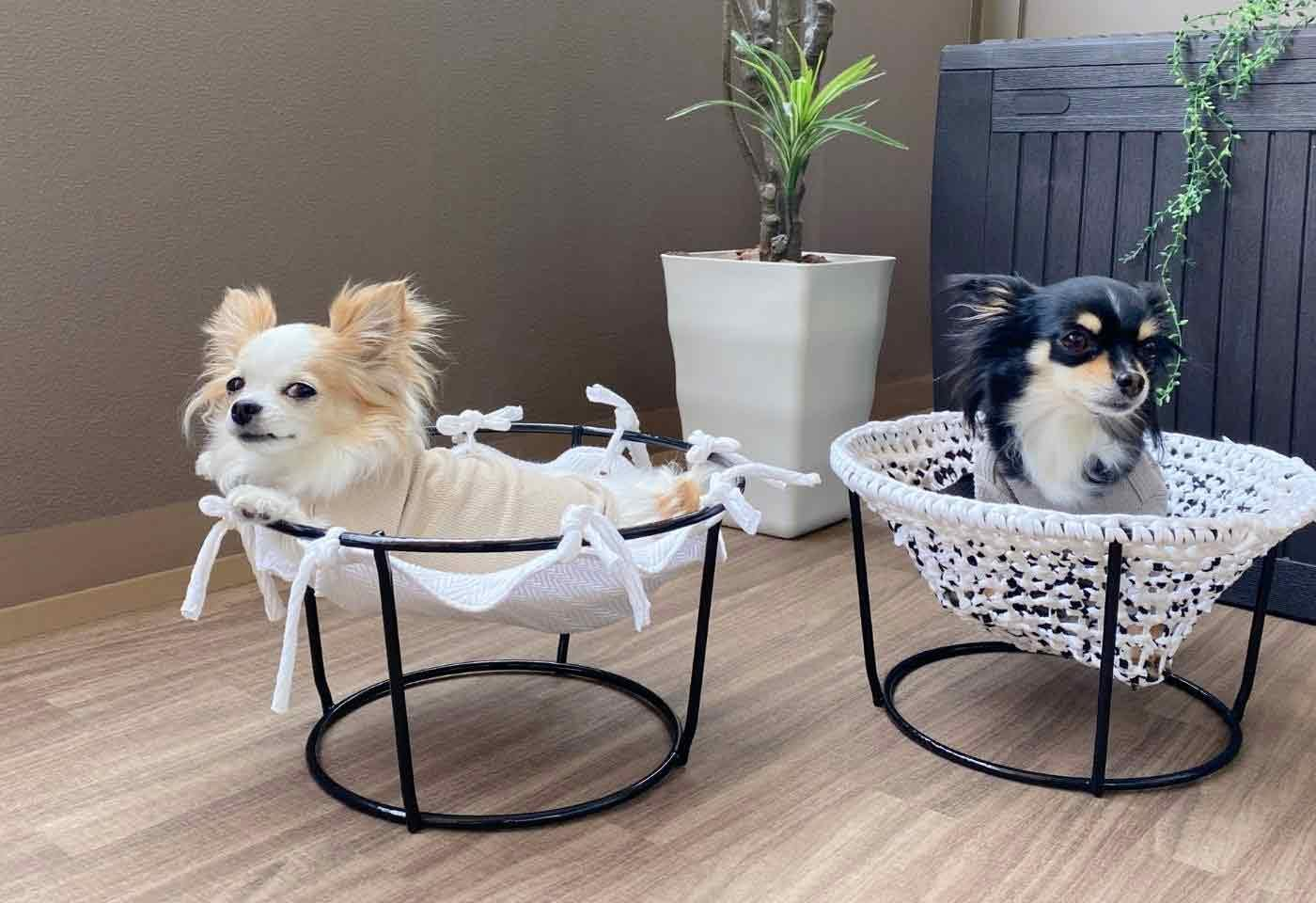【サスティナブルDIY】 古着Tシャツとプランタースタンドで初心者も簡単!犬用ハンモックの作り方