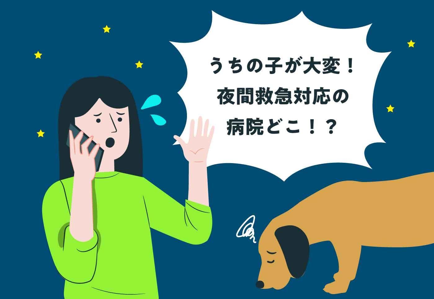 【救急病院5選】いざという時のために。都内の夜間・救急対応の動物病院をチェックしておこう!